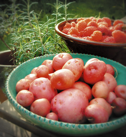 Kartofler-hindber