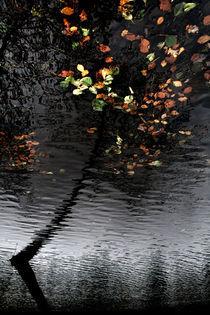 Leaves UnFallen von Daniel Zrno