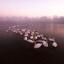 Swan Lake by Daniel Zrno