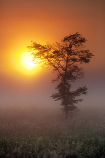 Lone Tree Touching the Sun by Daniel Zrno