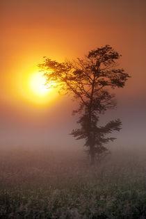 Lone Tree Touching the Sun by Daniel Zrno