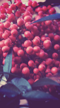 Vintage Berries by Emily Scott