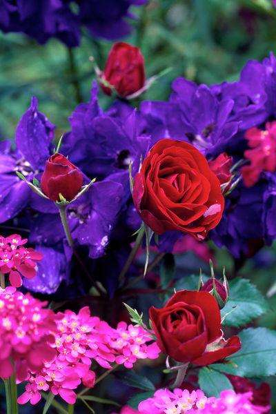 210af-red-red-roses-980017-003-rv-2-v-10