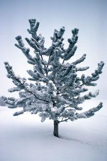 Velvet Tree 613 von Patrick O'Leary