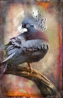 Finer Feathered Friends: Crested Dove von Alan Shapiro