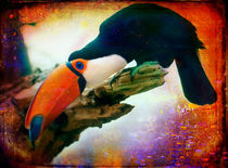Finer Feathered Friends: Toucan by Alan Shapiro