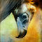 Finer-feathered-friends-vulture
