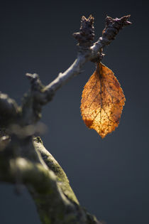 Last leaf on the tree