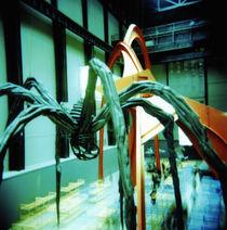 Spider by Giorgio Giussani