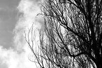 Bare-tree