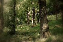 waldlichtung by Elke Balzen