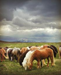 Icelandic Wild Horses by Kristjan Karlsson