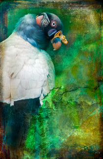 Finer Feathered Friends:  King Vulture von Alan Shapiro