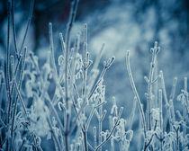 Frosty Morning by Joanna Kapica
