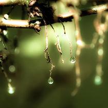 Spring Mist by Joanna Kapica