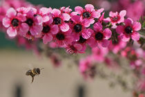 Bee by Ricardo Alves