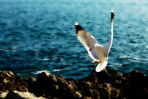 Seagull by Ricardo Alves