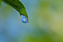 Waterdrop II by Ricardo Alves