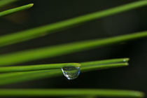 Waterdrop by Ricardo Alves