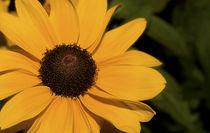 Nature-art-in-yellow