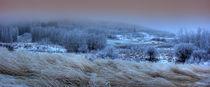 Winter4-2gf