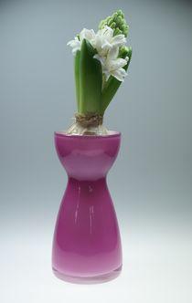 Hyazinthe in der Vase von lichtbildersalon