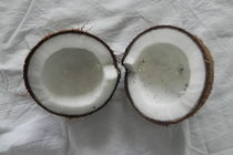 Kokosnuss von Kathrin Kiss-Elder
