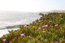 Californian Coast by May Kay