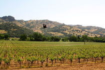 Wine Country, California by May Kay