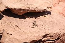 Lizard on rocks  von May Kay