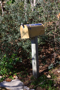 Overgrown Mailbox by Louise Heusinkveld