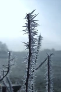 Macro Hoarfrost crystals by Elizabeth Marsden