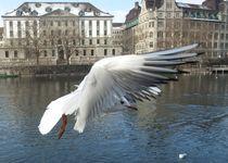 Zurich Seagull by Elizabeth Marsden