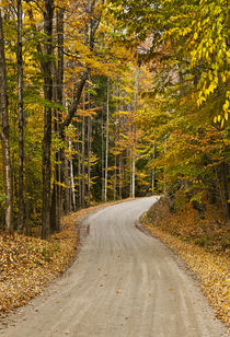 Autumn country road, Vermont, USA von John Greim
