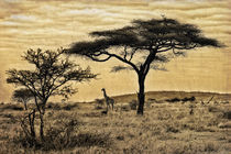 Out in the Savannah by Giuseppe Maria Galasso