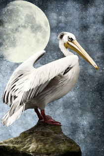 Pelican Night von AD DESIGN Photo + PhotoArt