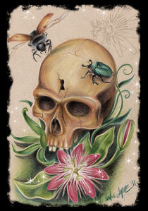 skull with bugs  by constantina