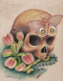 Skull with moth  by constantina