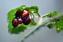 Ladyhug by Nick Flegg