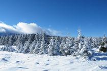 Winter Fairy Tale by Dejan Knezevic
