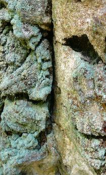 Mann im Baum von gerhard-bergmann-foto
