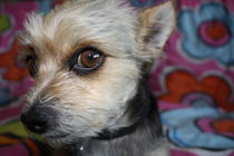 Model Dog von Ashley Robertson