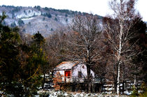 Red door in the snowy wood. In Sicily. by turi-caggegi