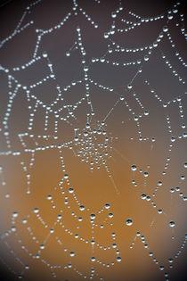 Spinnennetz mit Morgentau von Günther Lippl