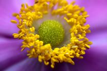 Blumenmitte von Günther Lippl
