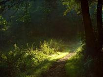 Sommermorgenlicht by Franziska Rullert