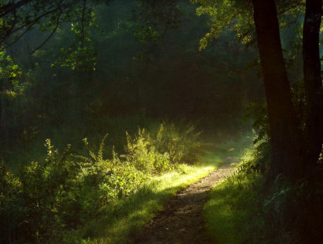 Sommermorgenlicht