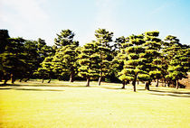 TREES von Giorgio Giussani