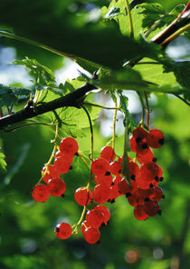 Berrys by Kristjan Karlsson