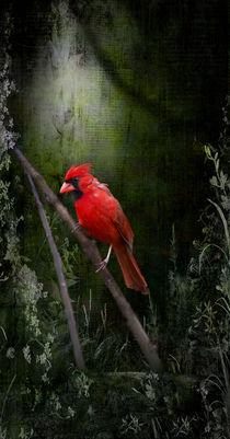 Cardinal In Spring - Angel Wings von Cris  Hayes